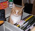 cat in file drawer